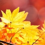 Fun Fall activities - check up with your physical therapist to stay healthy this fall