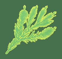 Tea Tree Aromatherapy