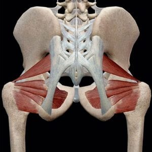 Hip rotators