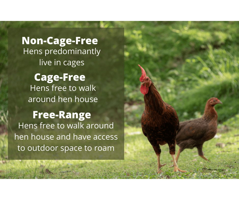 FRRee-range or cage free, whats the difference?